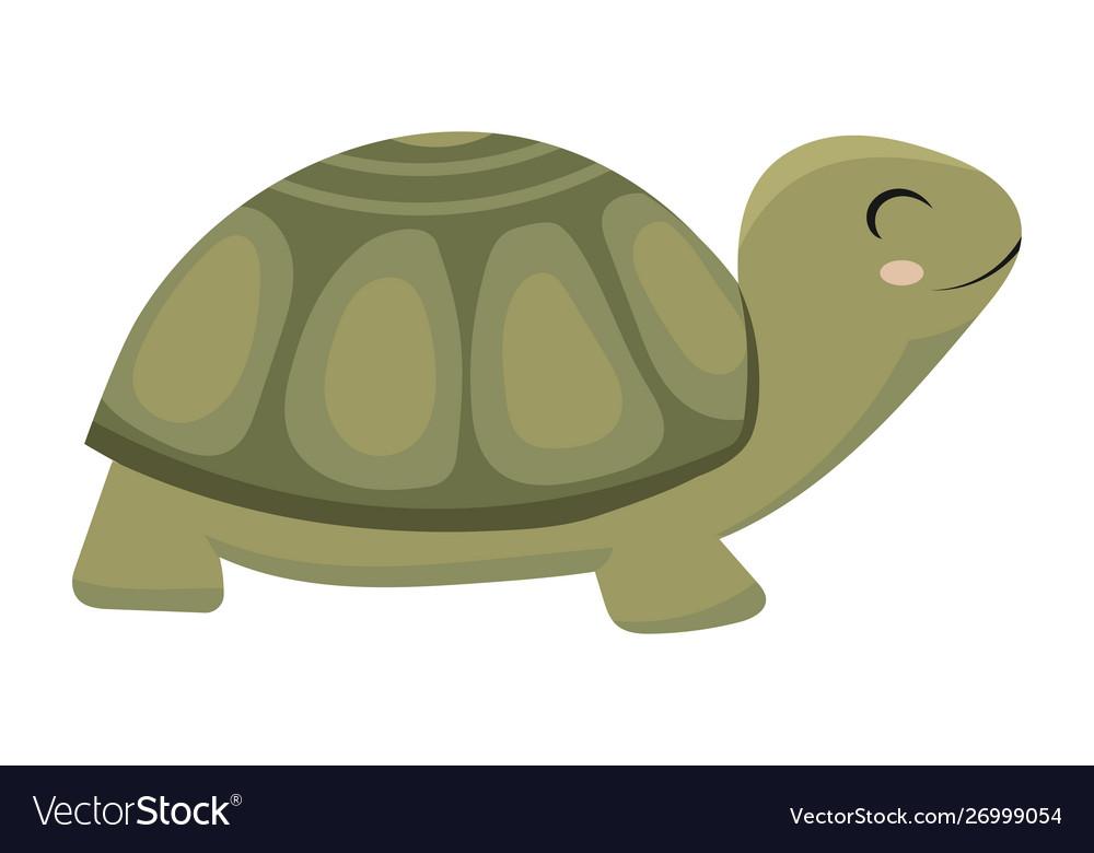 Cartoon turtle a green
