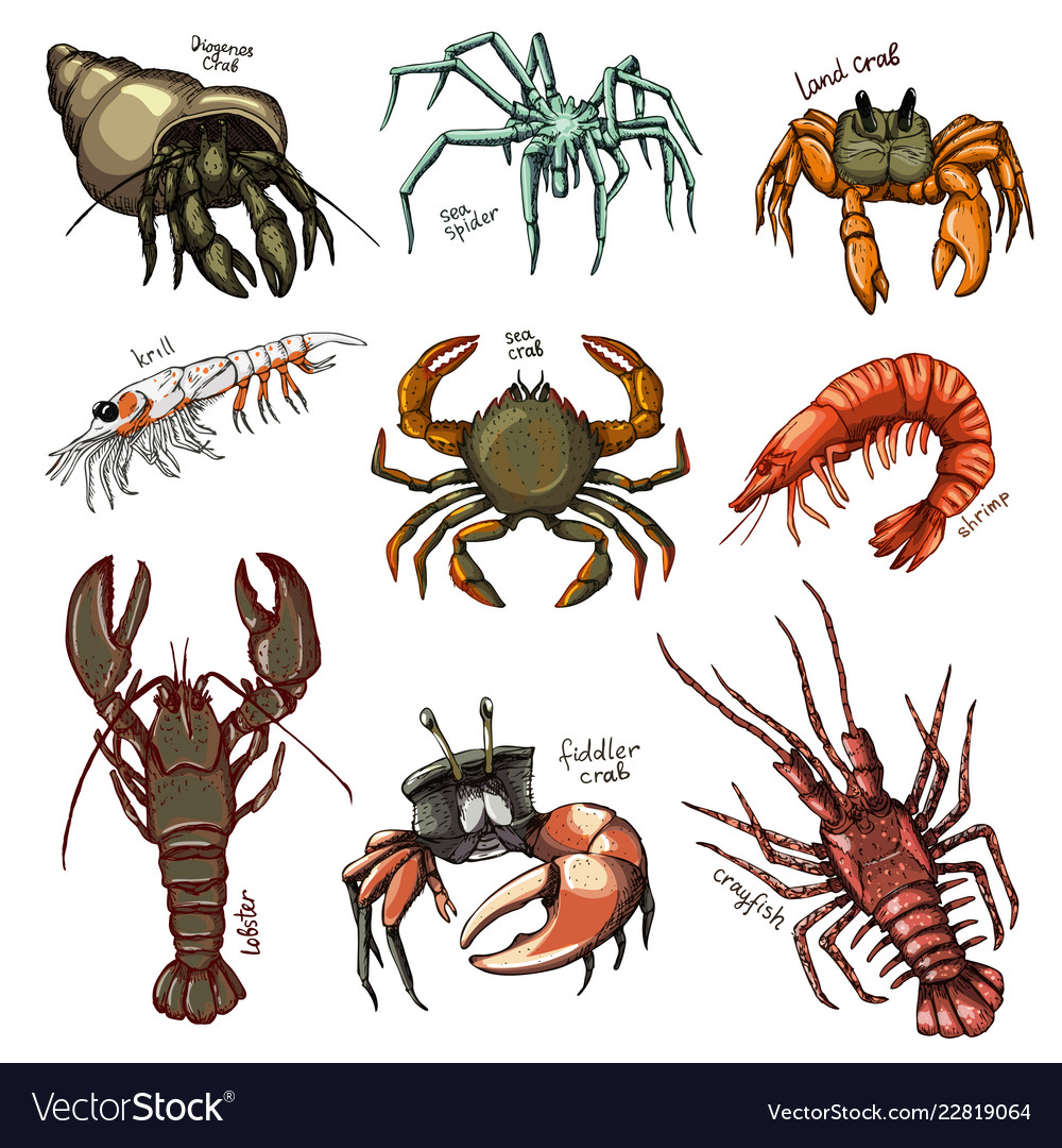 Crustacean crab prawns ocean lobster and