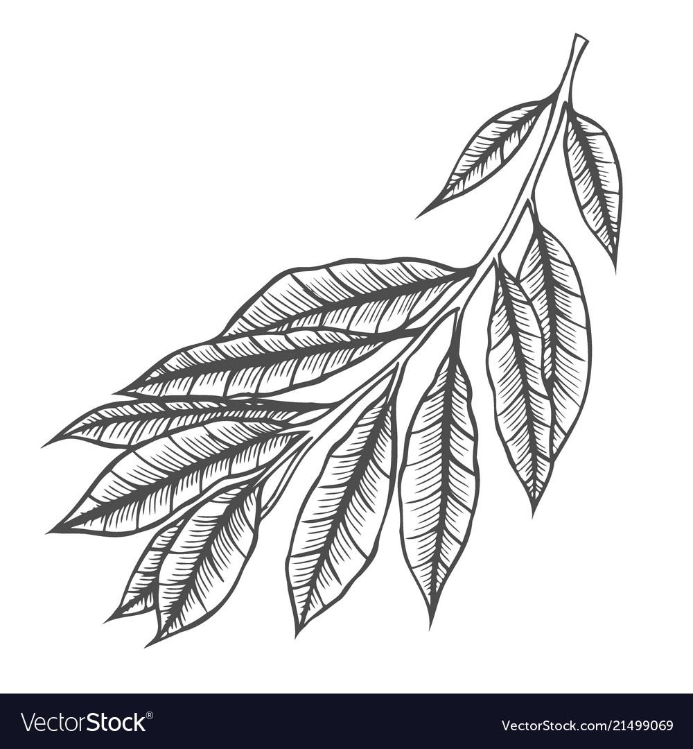 Branch of plant