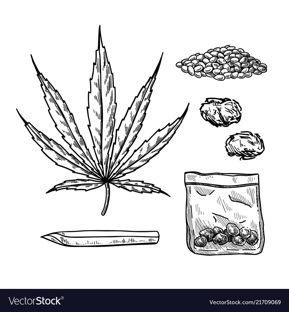 Marijuana or cannabis drawing set plant