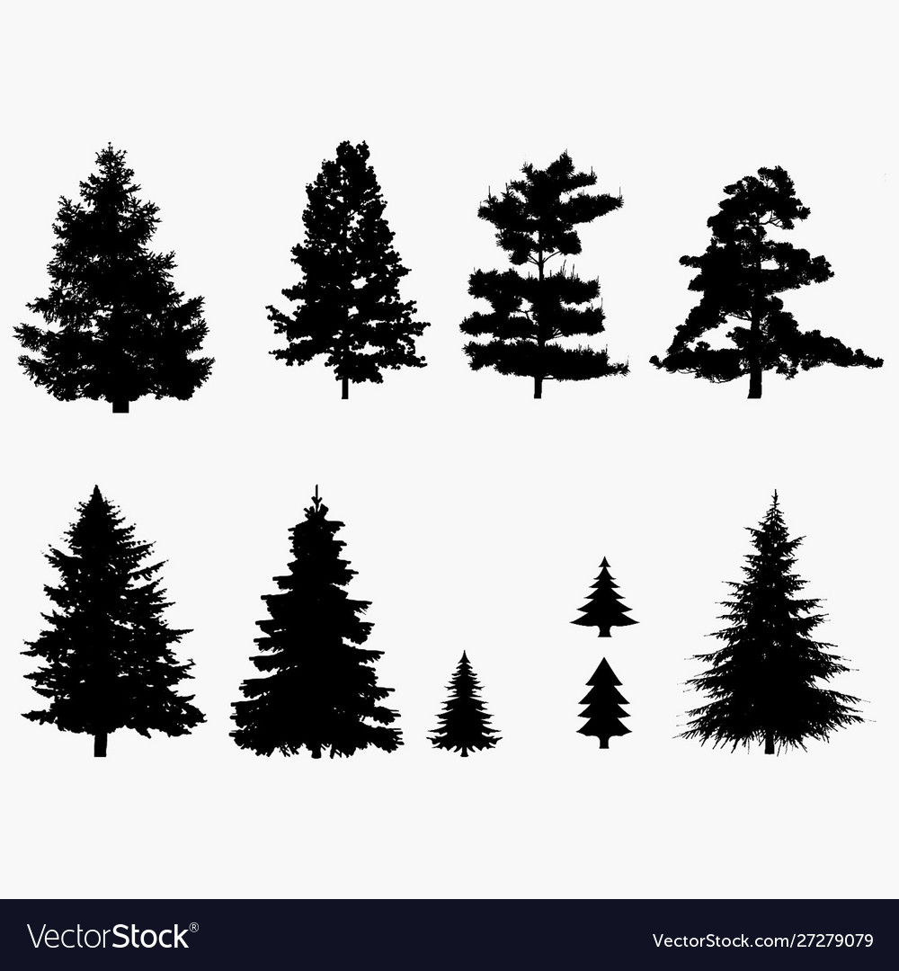 Pine Tree Silhouette Royalty Free Vector Image