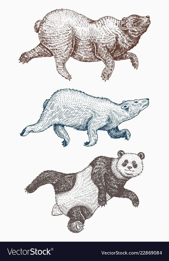 Wild animal jumping soaring brown and polar bear