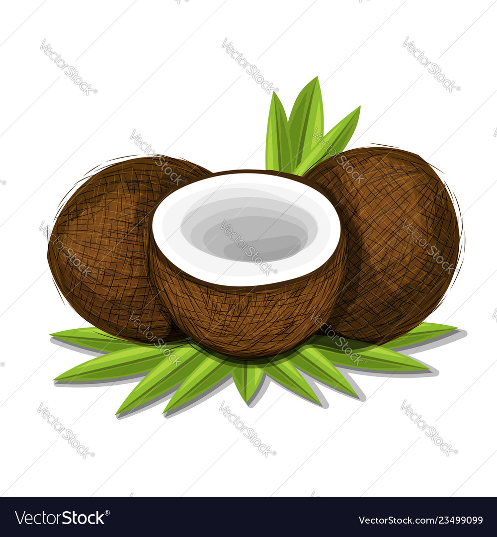Pieces of coconut with leaves isolated on white
