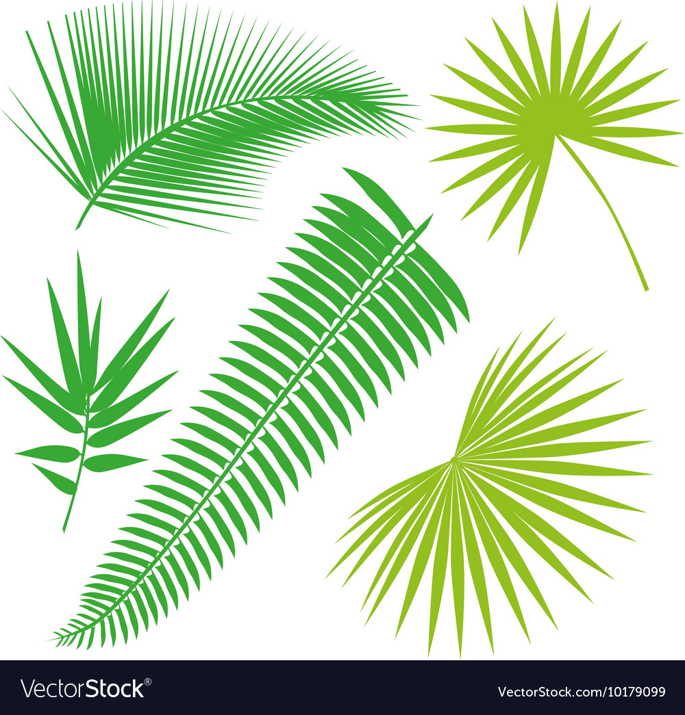 Tropical Leaves Collection isolate Set