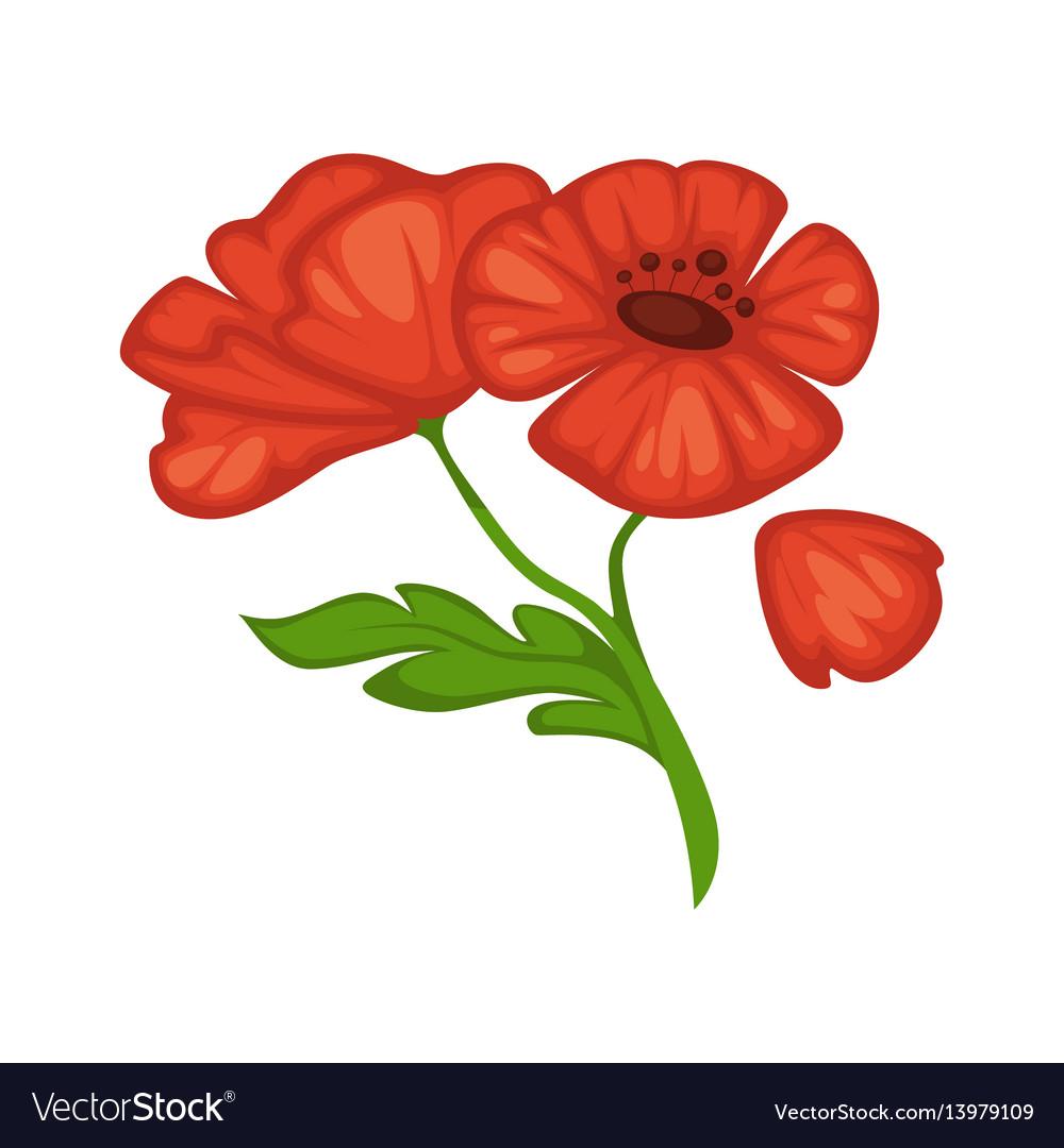 Flower Poppy Blossom Bud Or Bloom Flat Royalty Free Vector