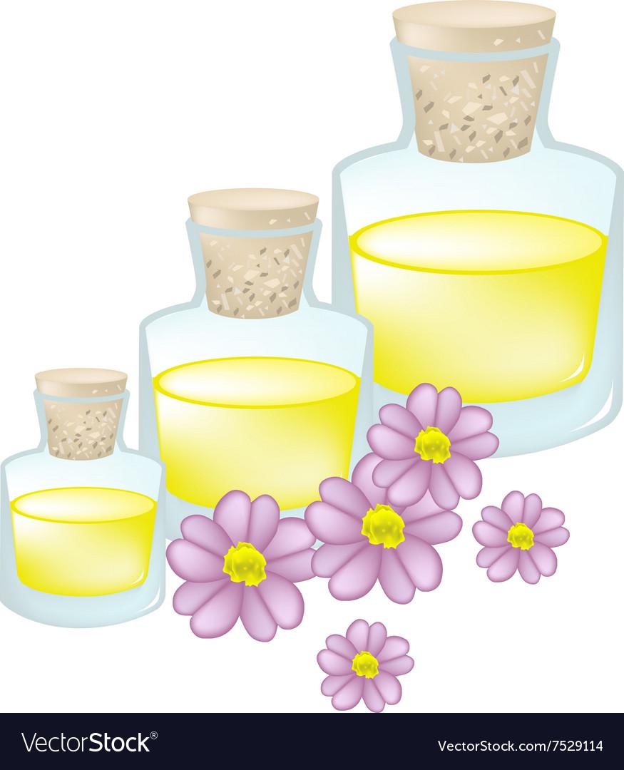 Pink Yarrow Or Achillea Millefolium With Essential