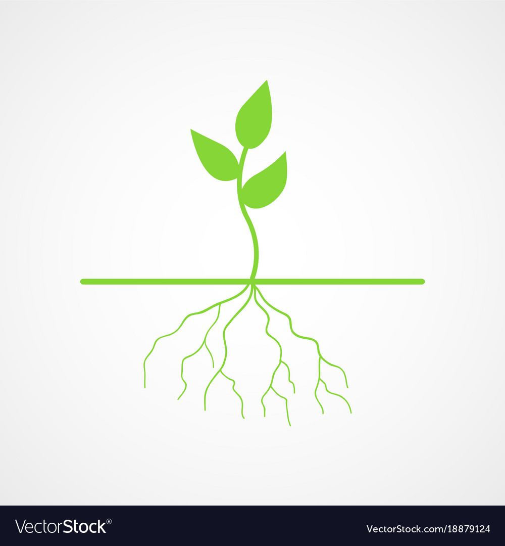 Graphic of young tree with root