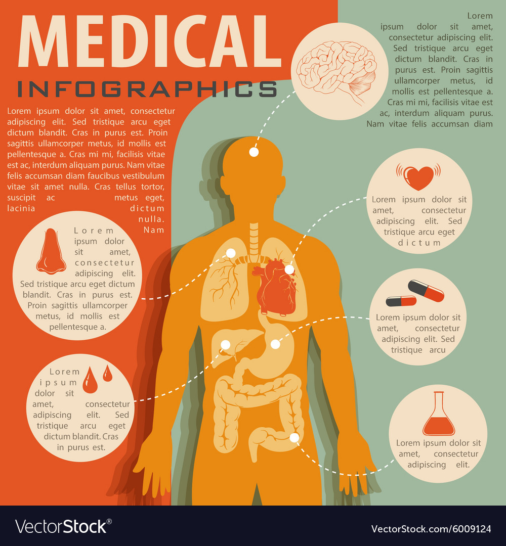 Medical Infographic With Human Anatomy Royalty Free Vector