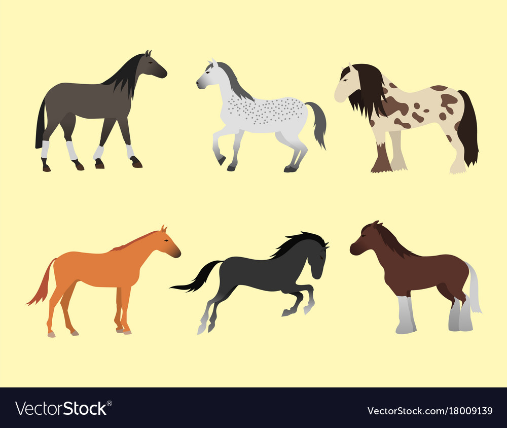 Horse pony stallion isolated different breeds