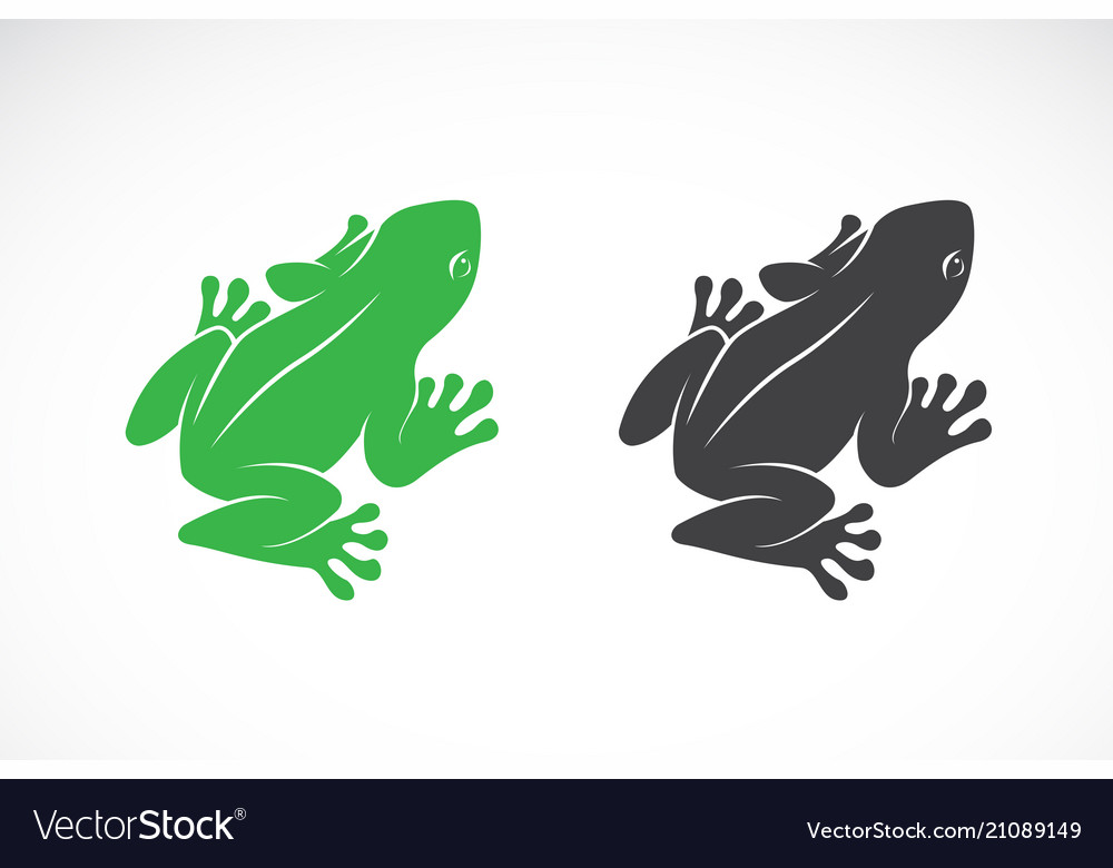 Frogs design on white background amphibian