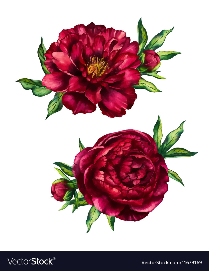 Set watercolor red peonies bouquets