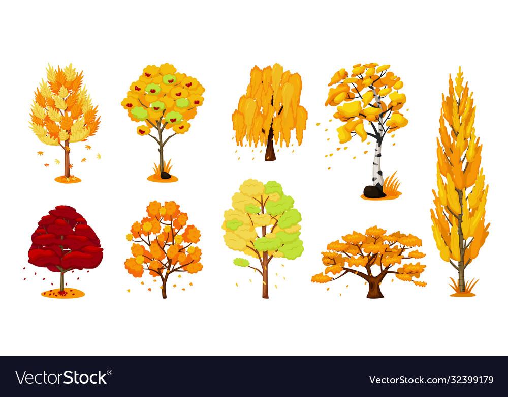 Autumn trees set isolated oak birch maple tree