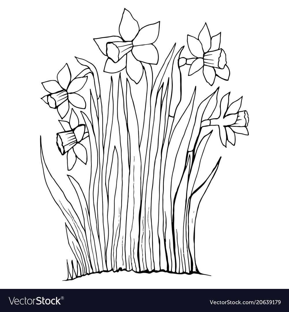 Coloring page collection flowers of the narcissus
