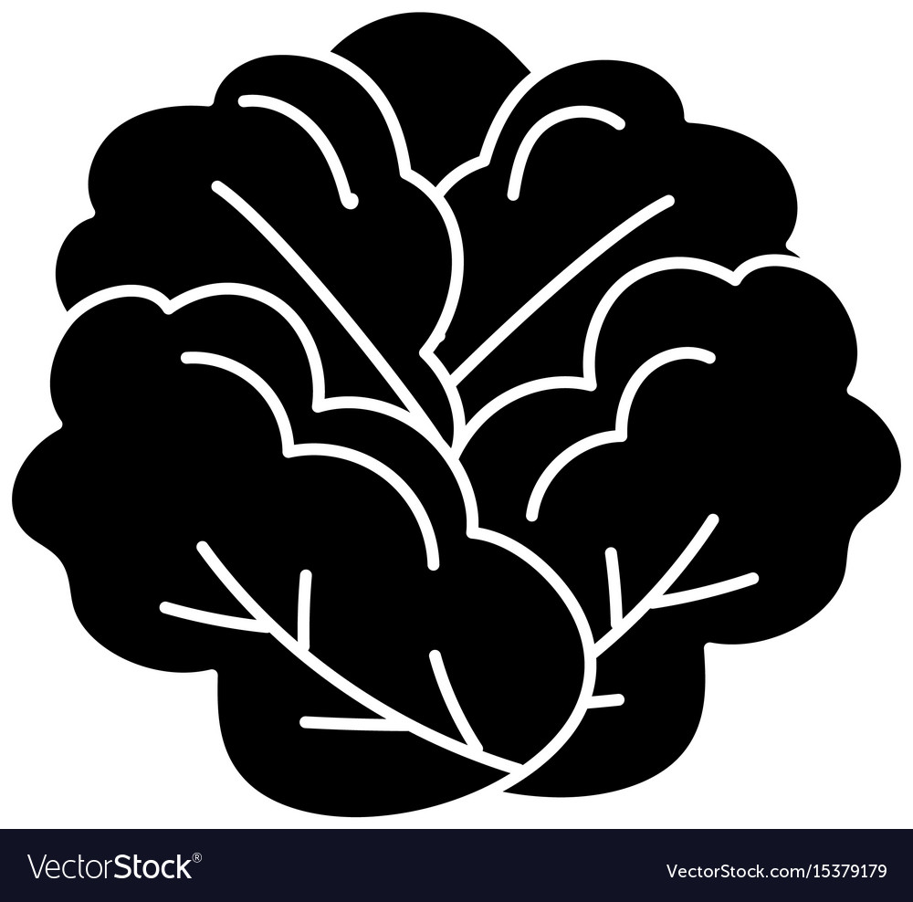 Contour delicious and health lettuce vegetable vector image