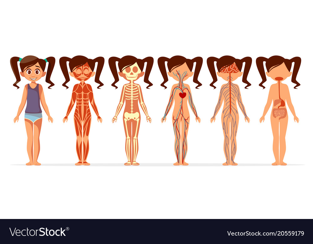 Girl Body Anatomy Cartoon Of Royalty Free Vector Image