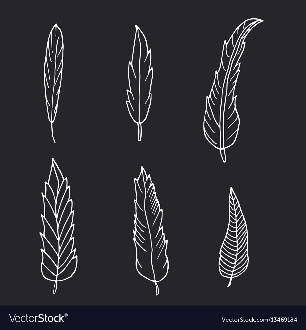 Hand drawn set of feathers on black background