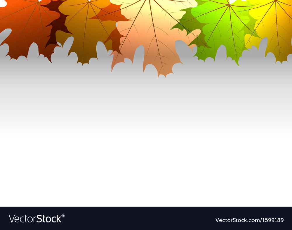 Background autumn big top leaves white