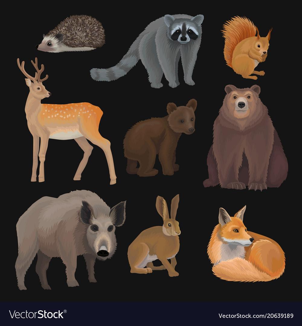 Wild northern forest animals set hedgehog