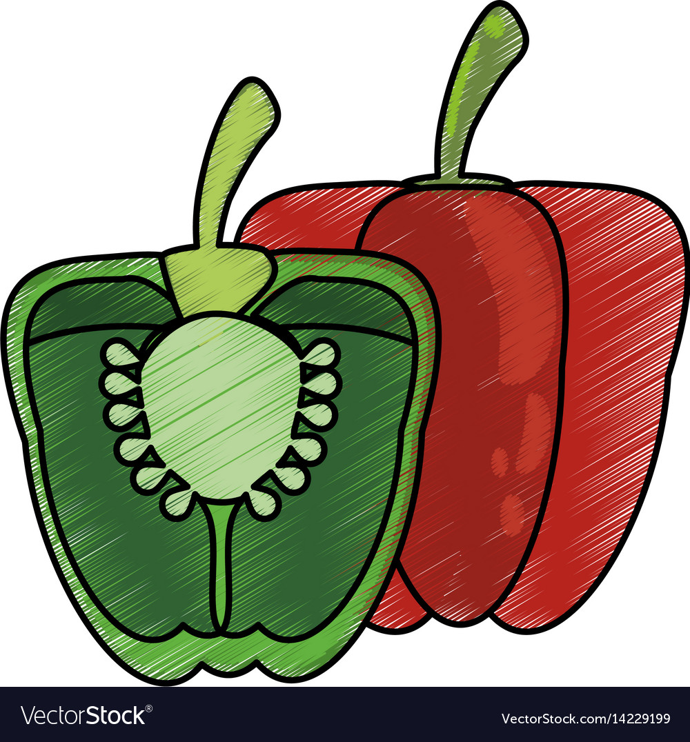 Drawing pepper half nutrition food vector image