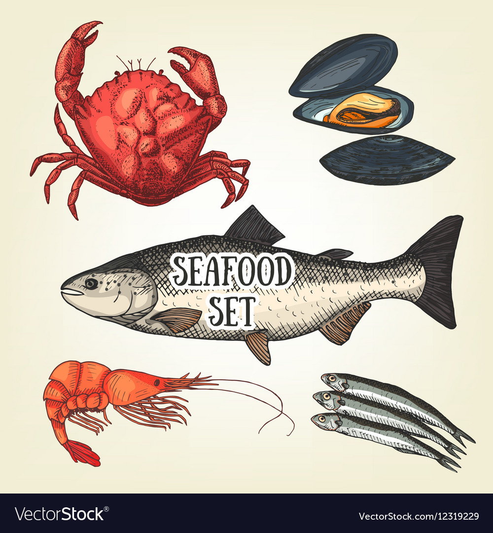 Creative seafood graphic sketch prawn