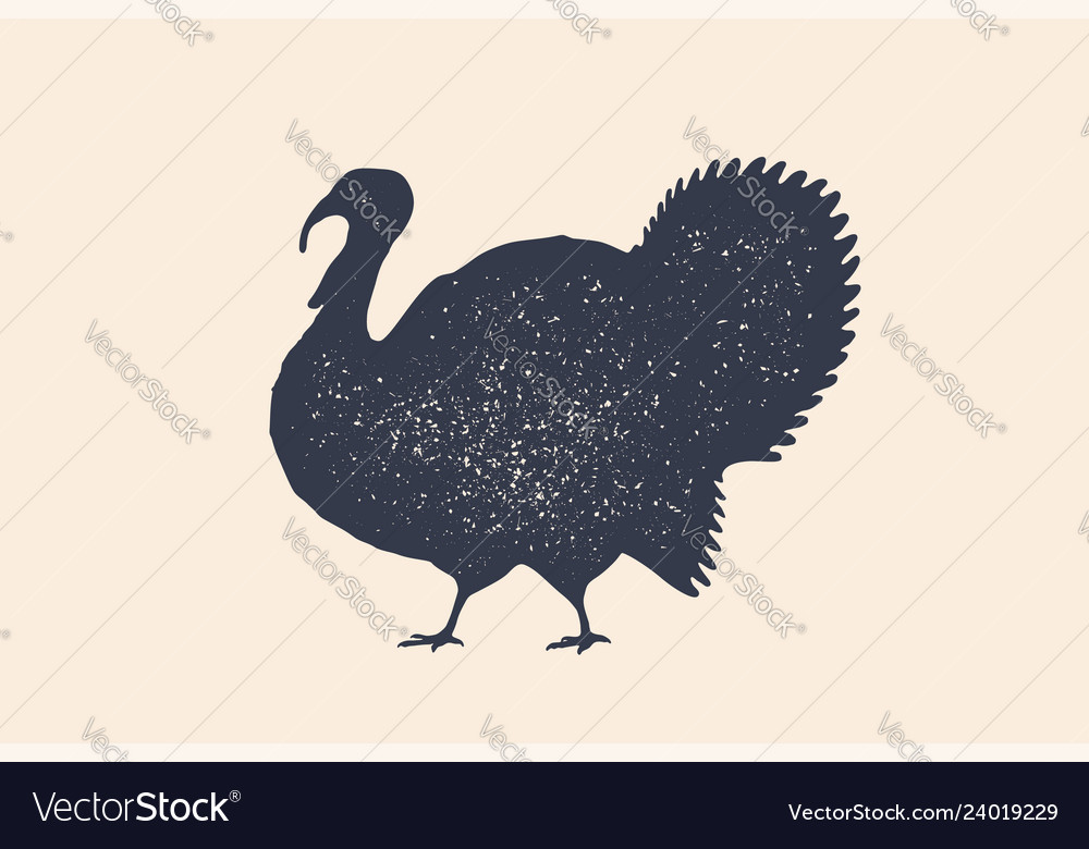 Turkey bird concept design of farm animals