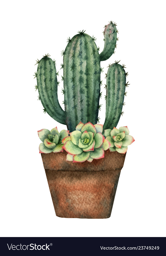 Watercolor composition of cacti and