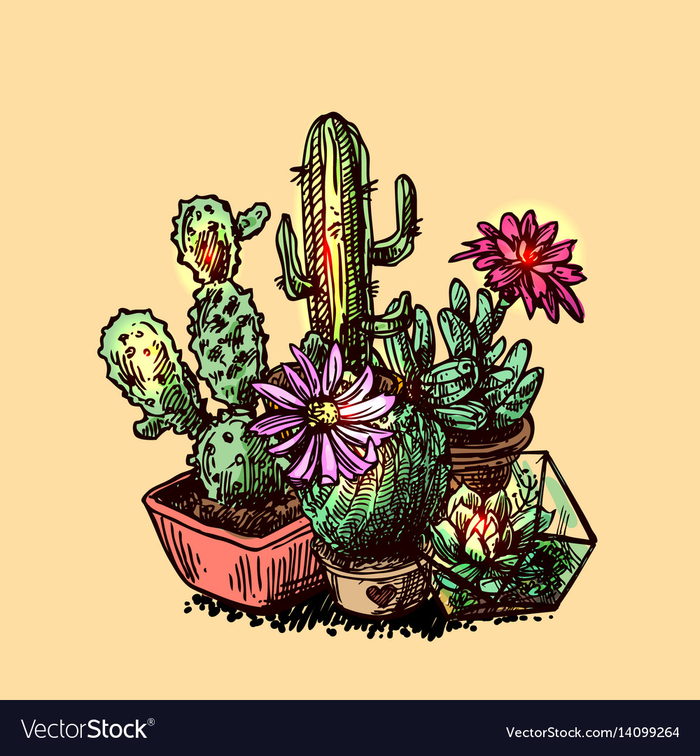 Succulents and cactus vector image
