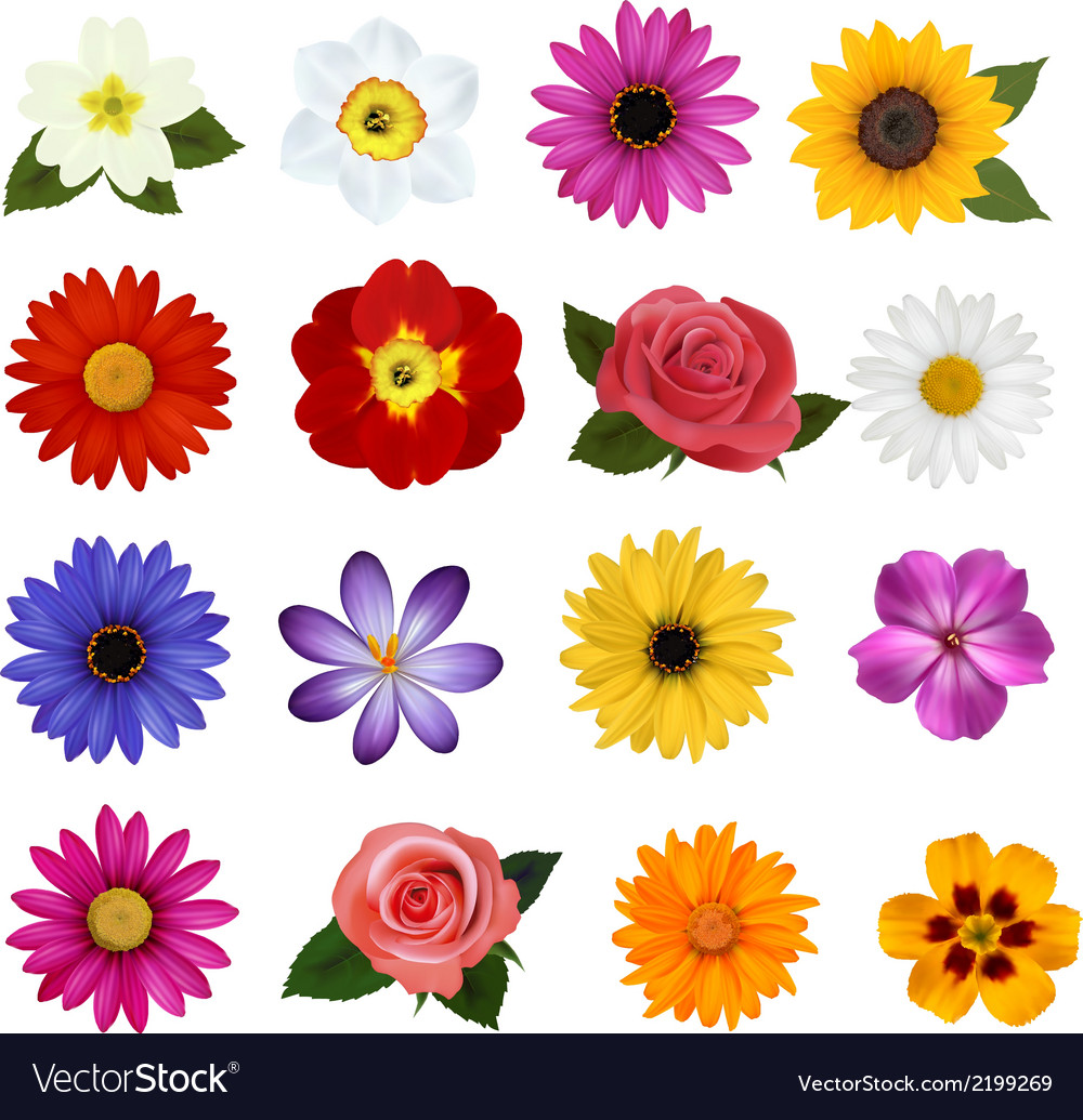 Big collection of colorful flowers