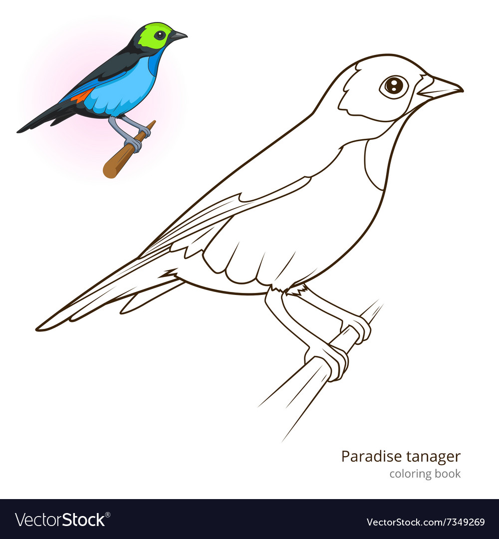 Paradise tanager color book Royalty Free Vector Image
