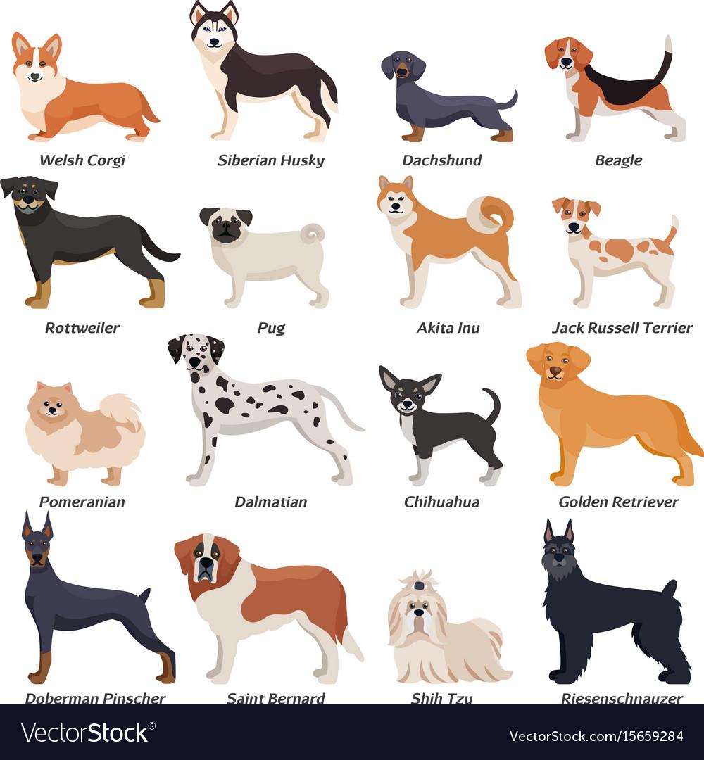 Purebred Dogs &