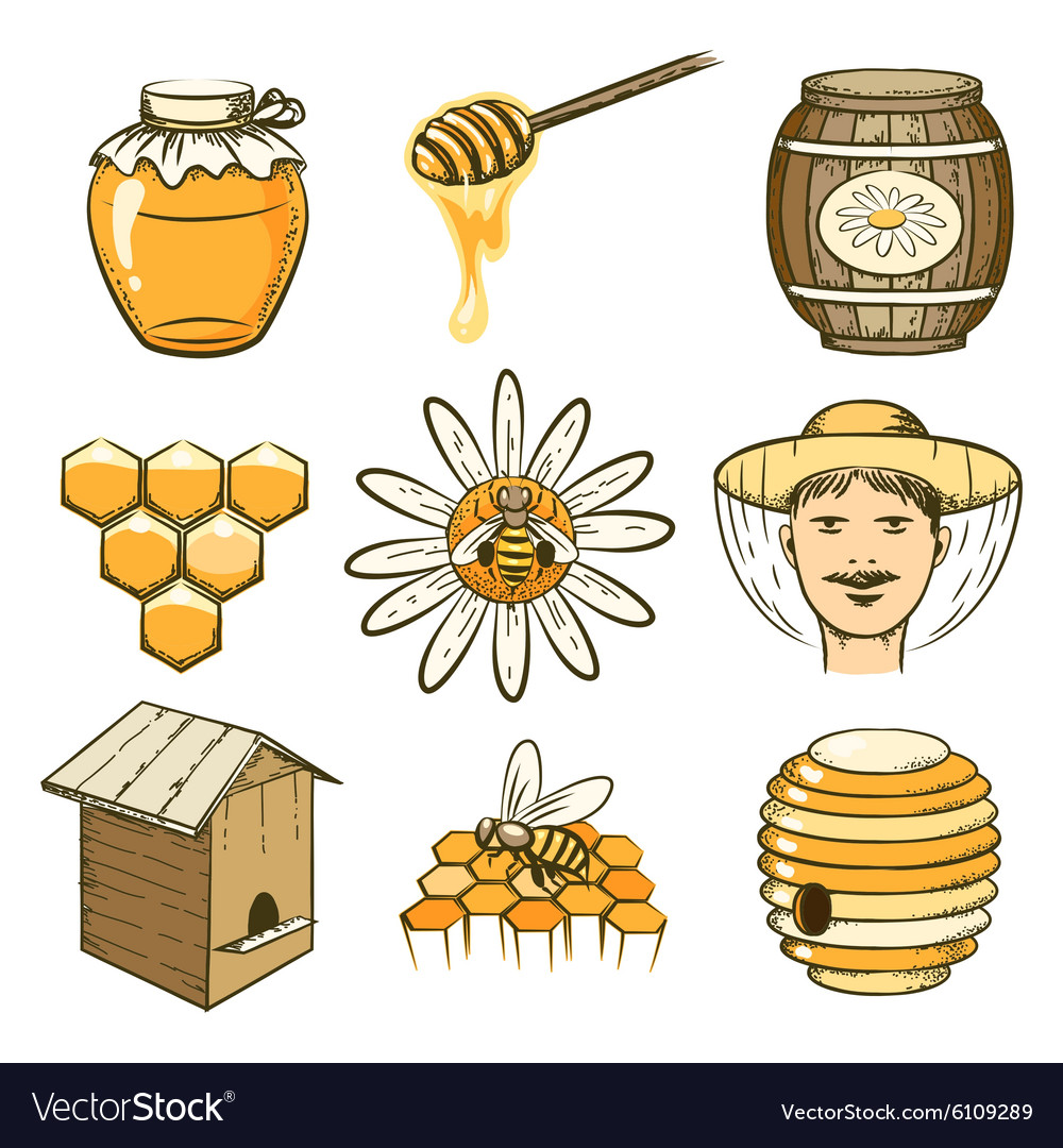 Hand drawn beekeeping honey and bee icons vector image