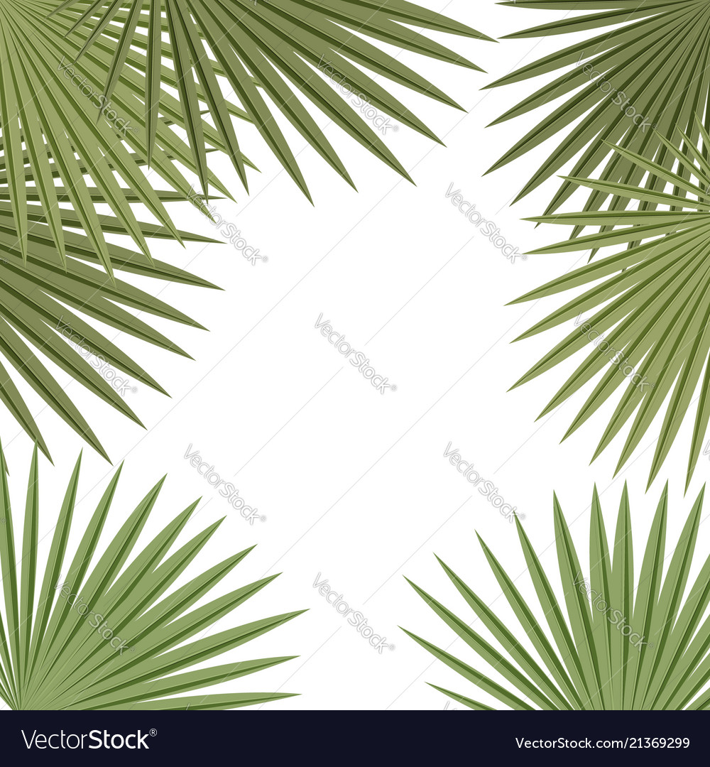 Palm leaves frame on white background tropical