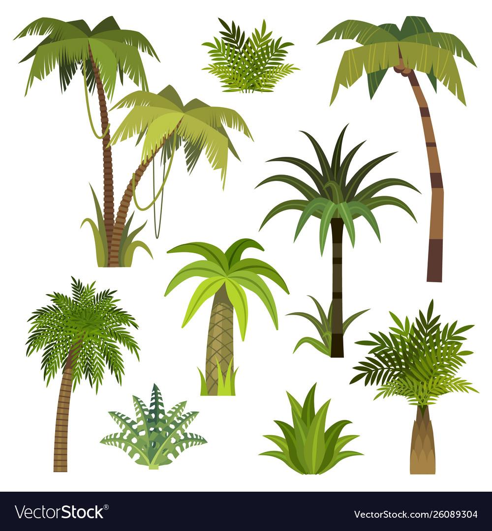 Cartoon palm tree jungle palm trees with green