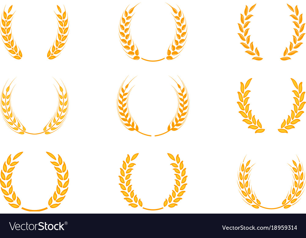 Gold Laurel Wreath A Symbol Of The Winner Wheat Vector Image