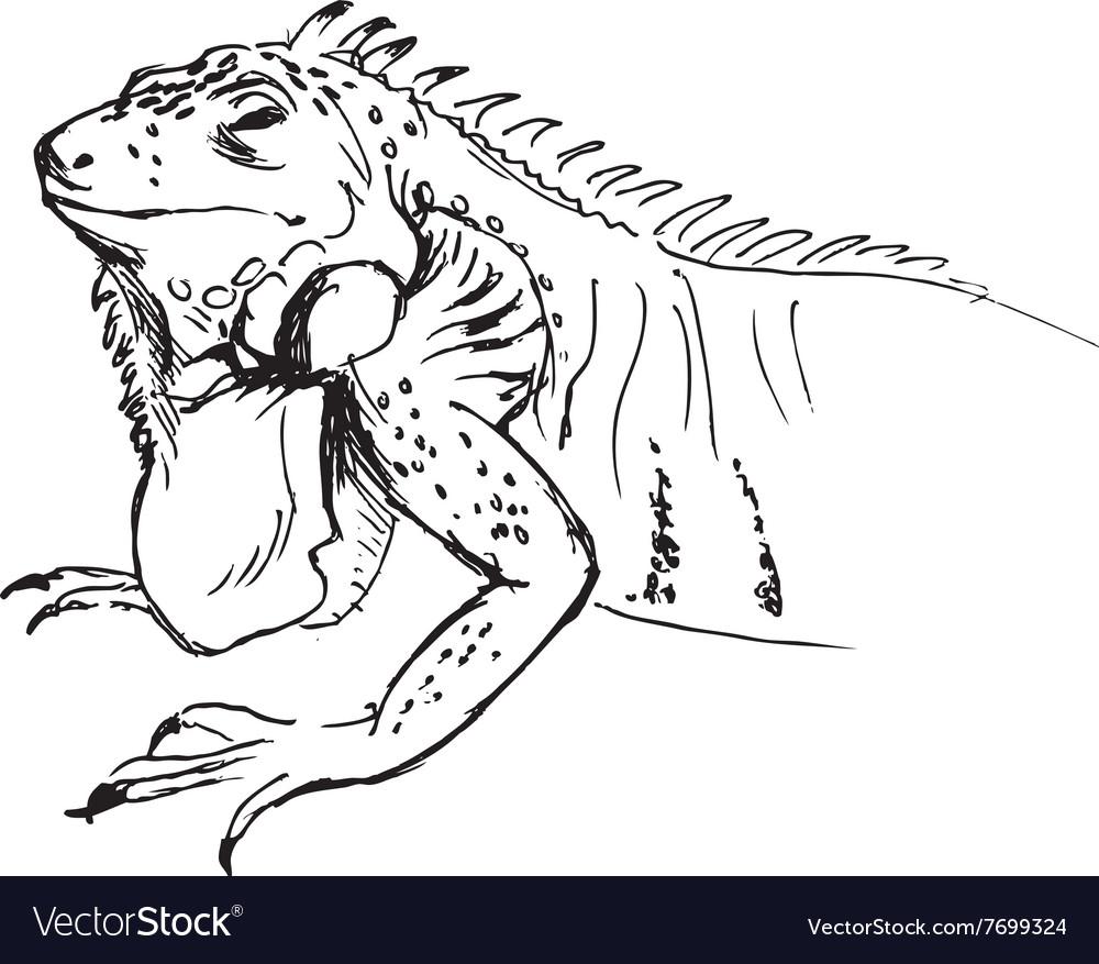 Hand sketch of iguana