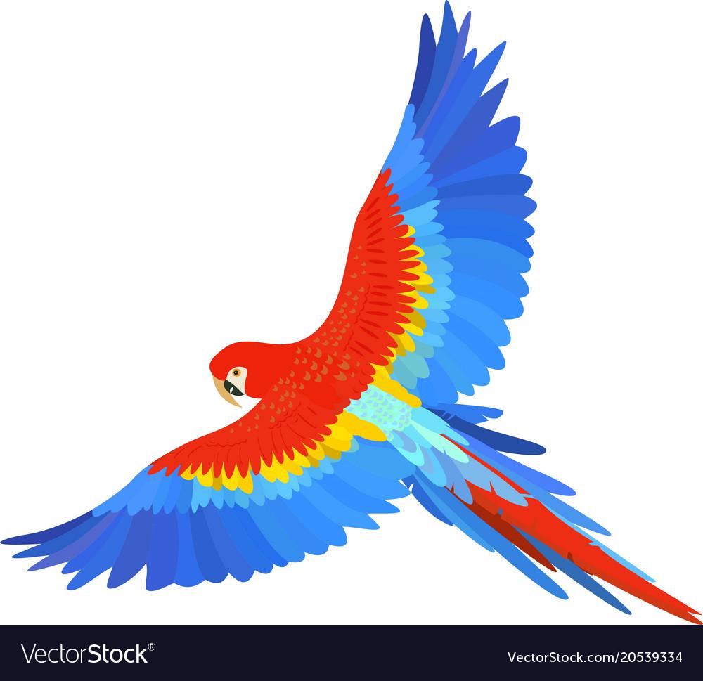 Ara macaw parrot spread wings