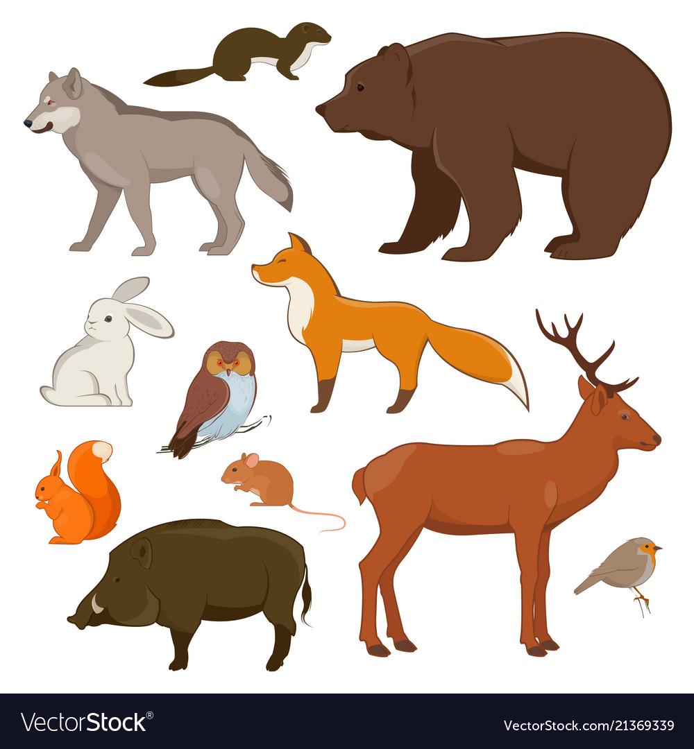 Forest wild animals collection