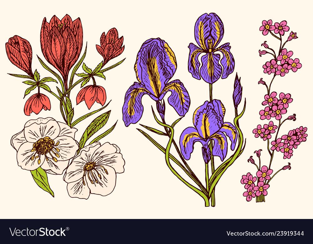 Wild flowers iris and poppy set of wedding