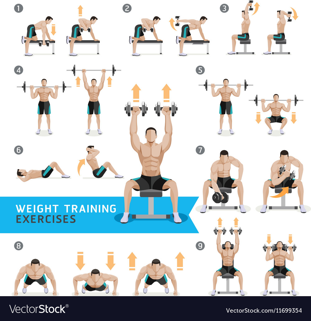 Free Weights Total Body Workout: Dumbbell Exercises And Workouts Weight Training Vector Image