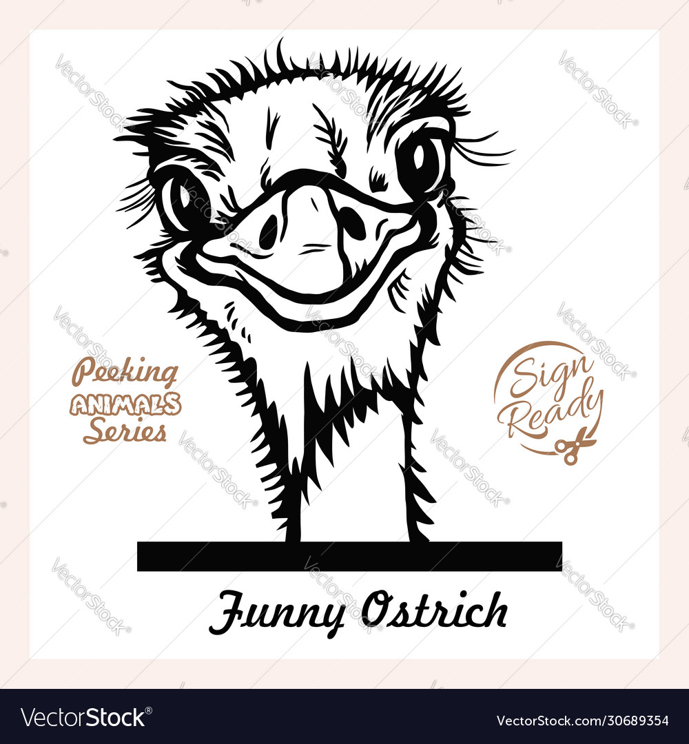 Peeking funny ostrich - ostrich looks out from