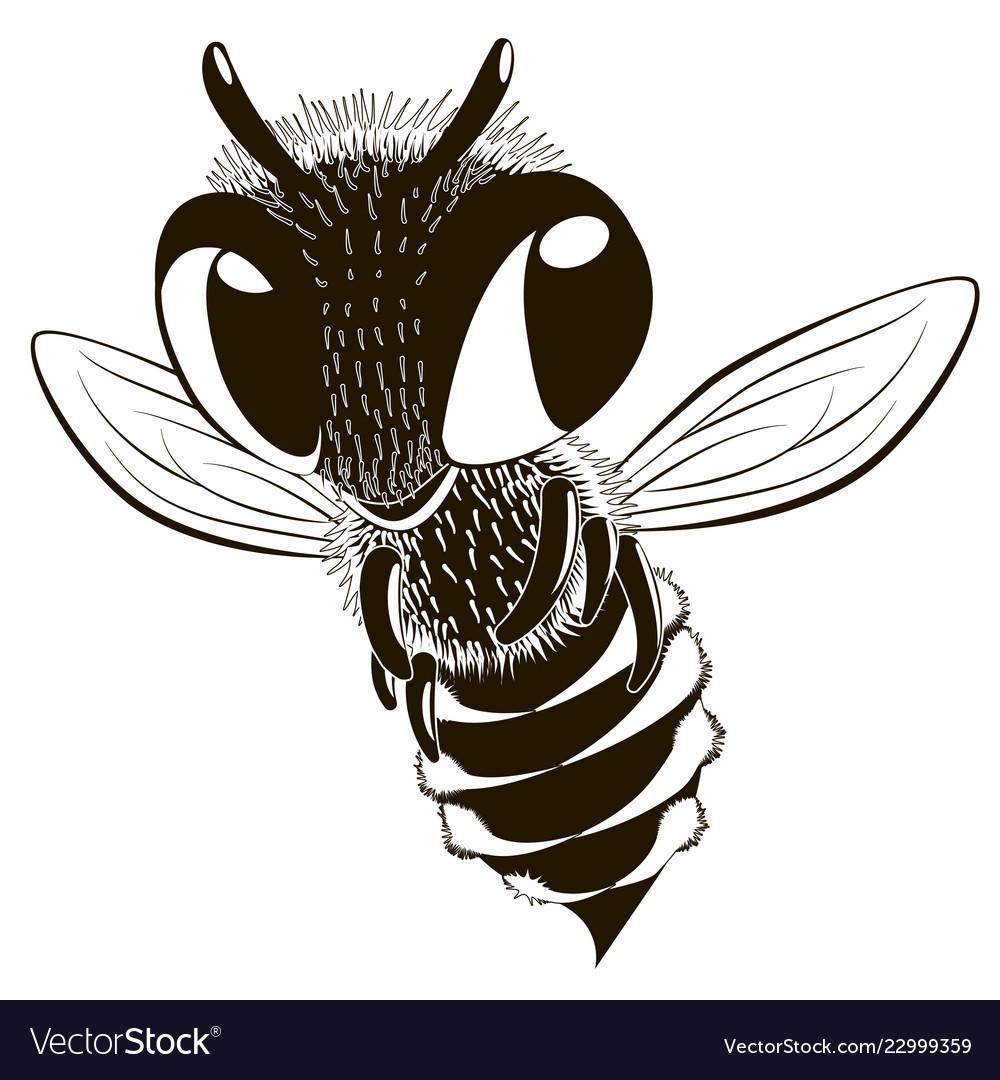 Happy monochrome bee