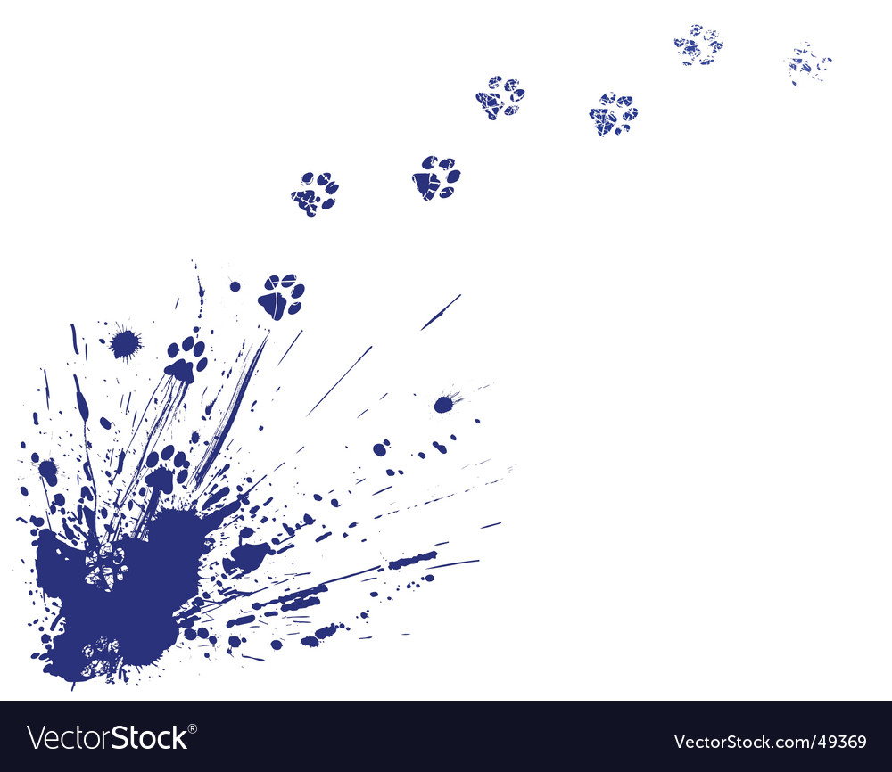 Cat spill vector image