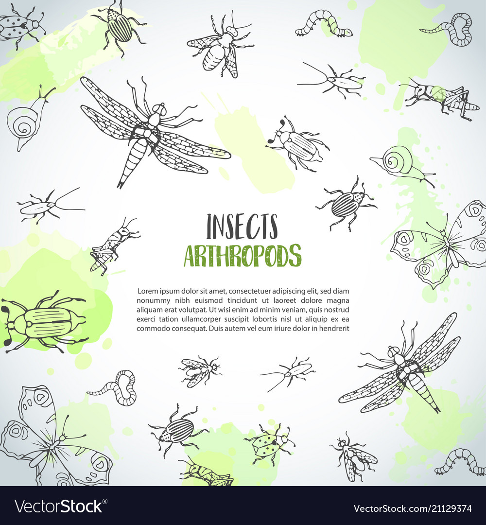 Bugs insects hand drawn background pest control