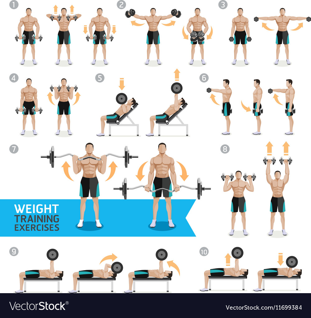 Strength Training: Dumbbell Exercises And Workouts Weight Training Vector Image