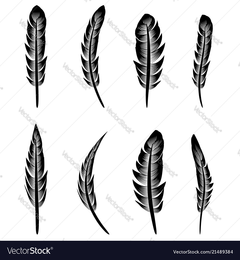 Feather silhouette collection