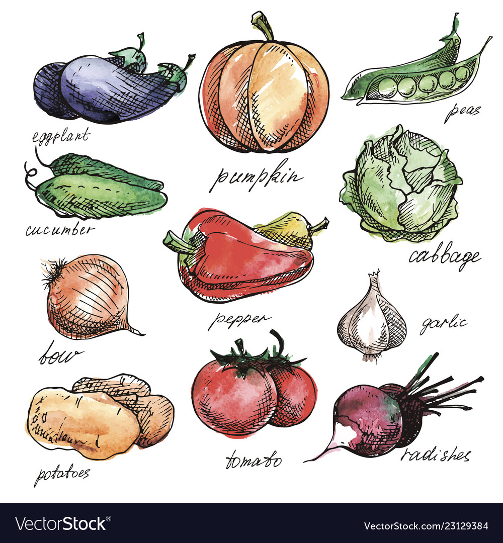 Vegetables hand drawn set