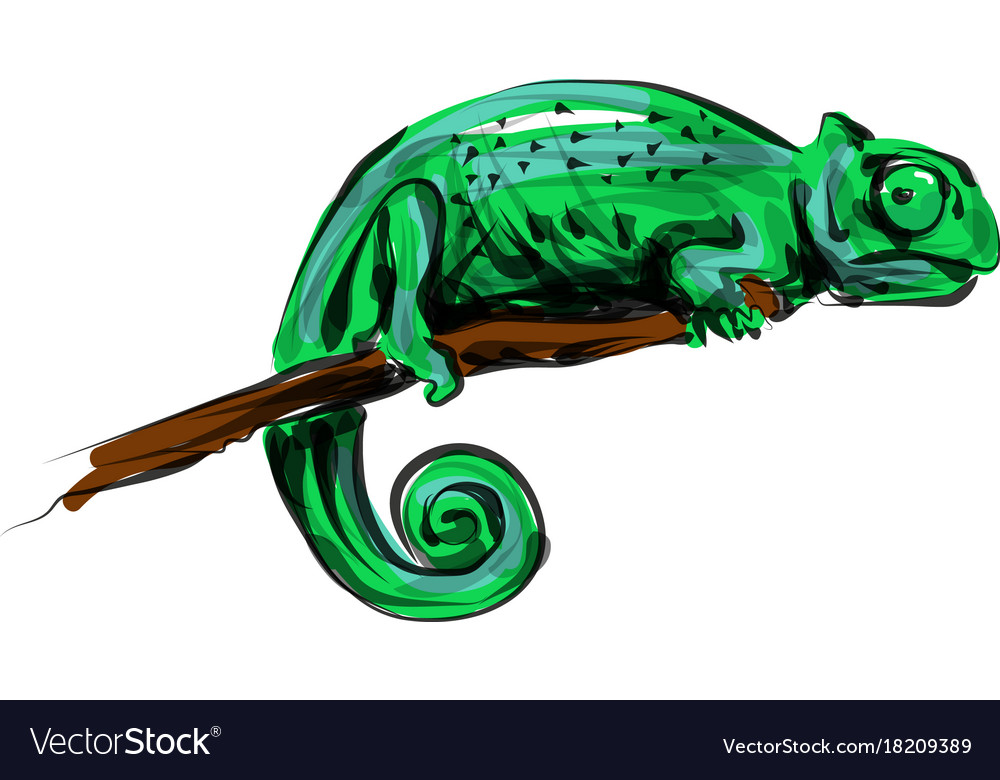 Color line sketch chameleon