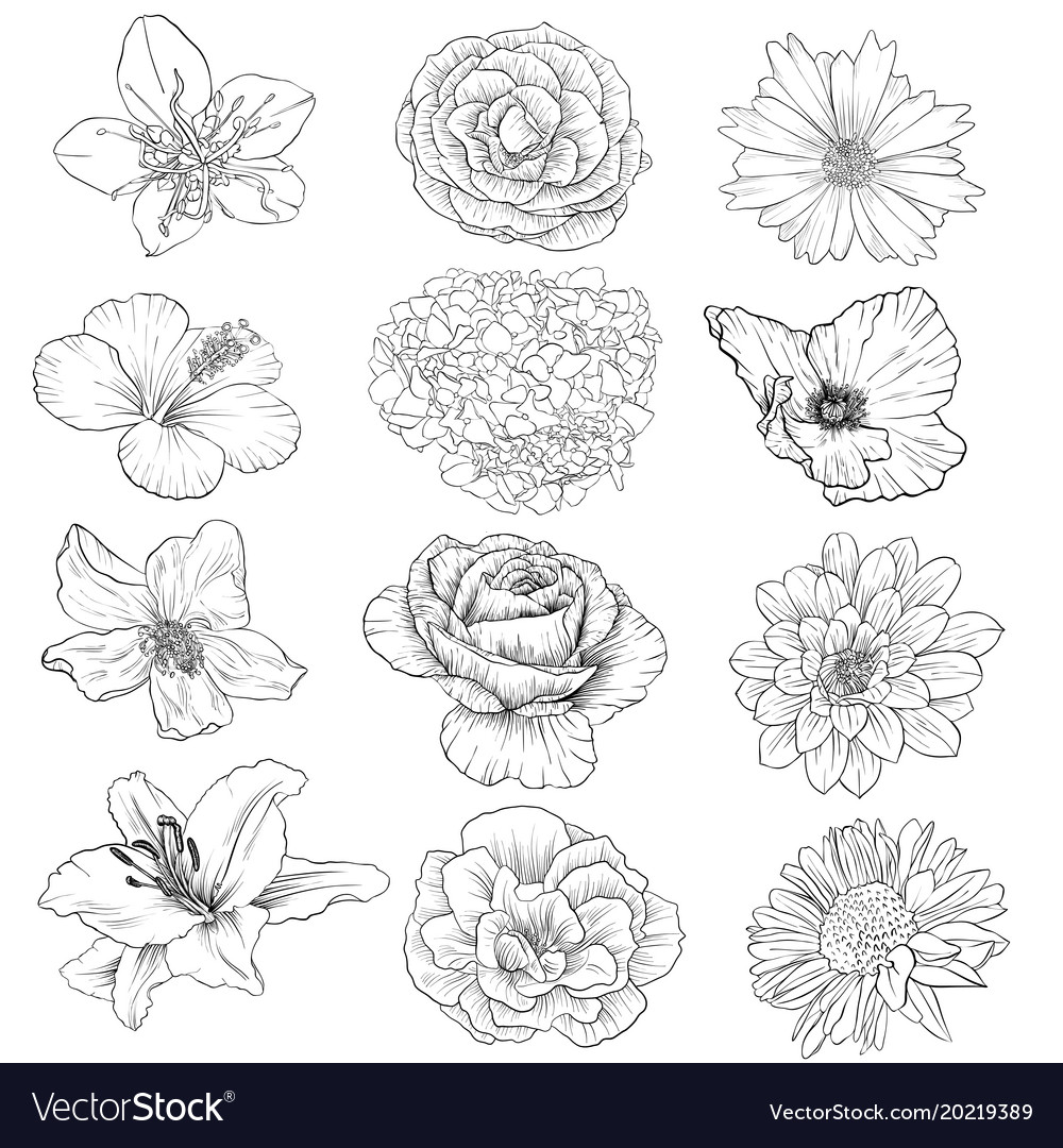 Drawing flowers vector image