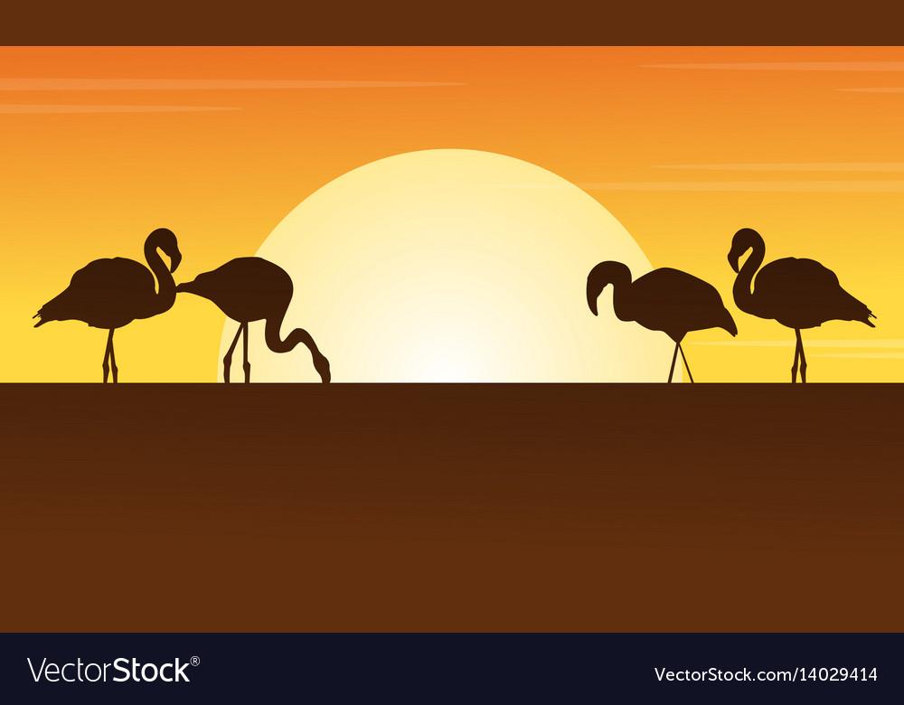 At sunset flamingo scene silhouettes