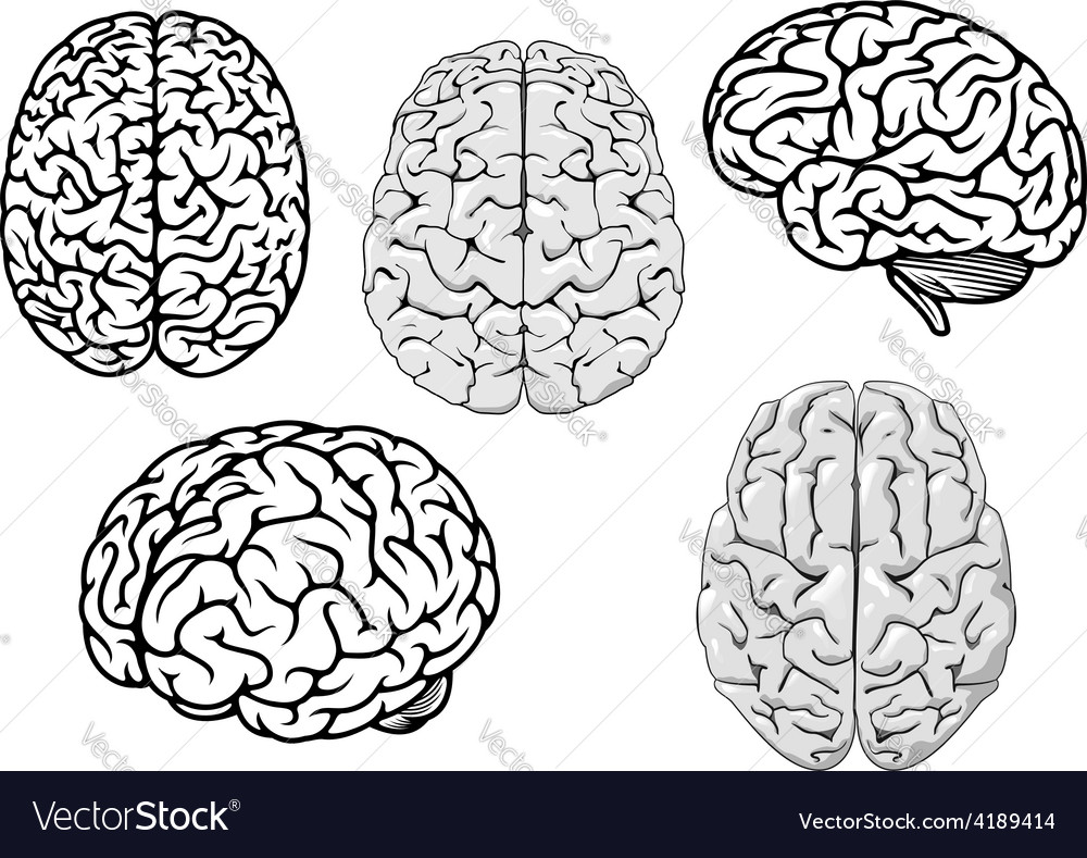 Black and white cartoon human brains vector image